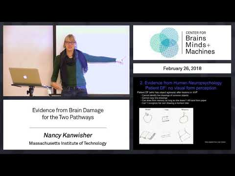 4.1 - Evidence from brain damage for the two pathways