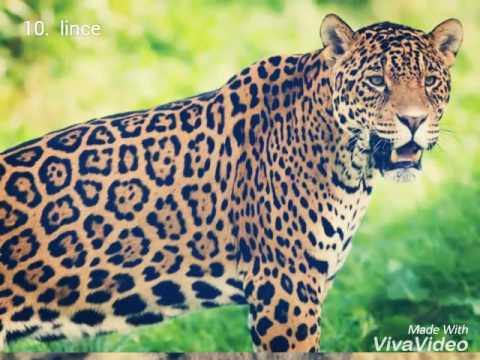 I 10 felini più belli