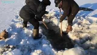 Рыбалка тягой на ключах (Разведка) Ленточные боры. 'Onkiavaimet ( Exploration ) Belt metsiä .'