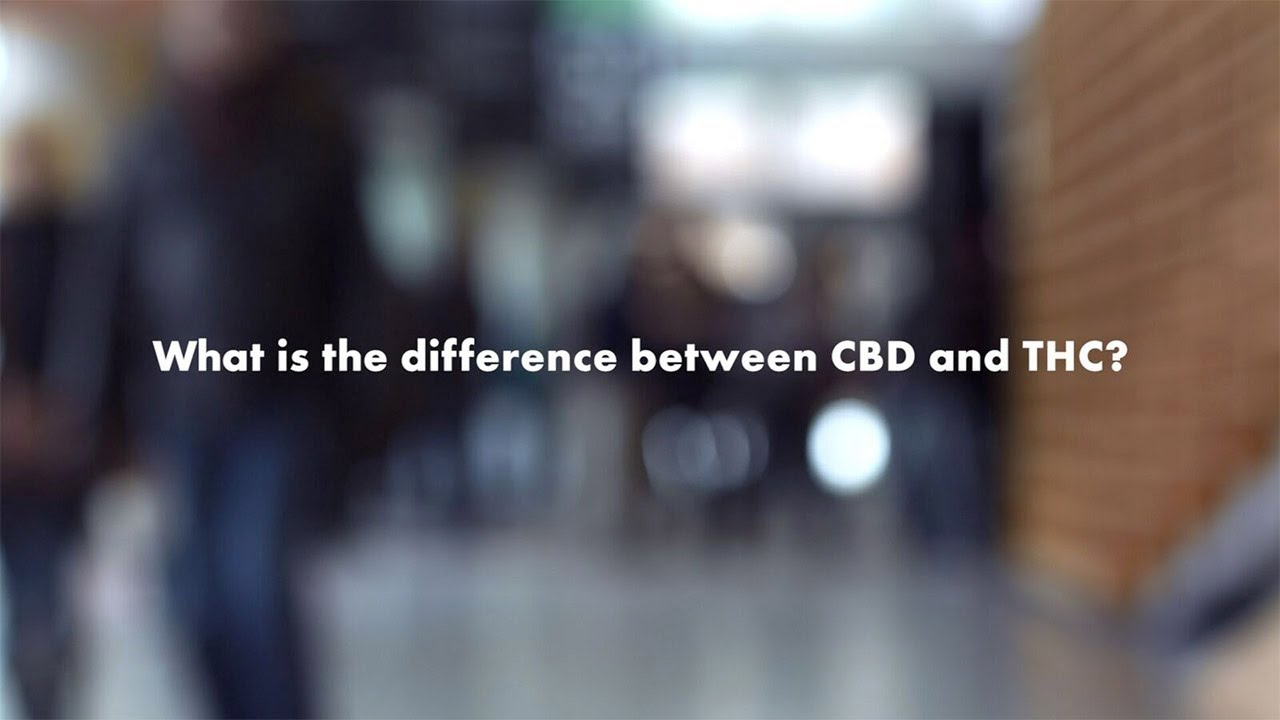 Your Cannabis Questions, Answered: How are THC and CBD different?
