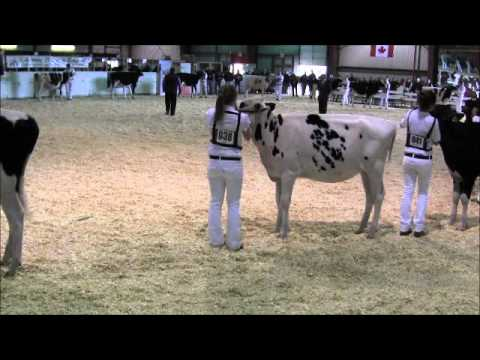 2012 Eastern Ontario - Western Quebec Championship Show - Class 3