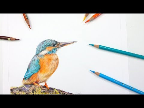 How To Draw A KINGFISHER | Colored Pencil Tutorial