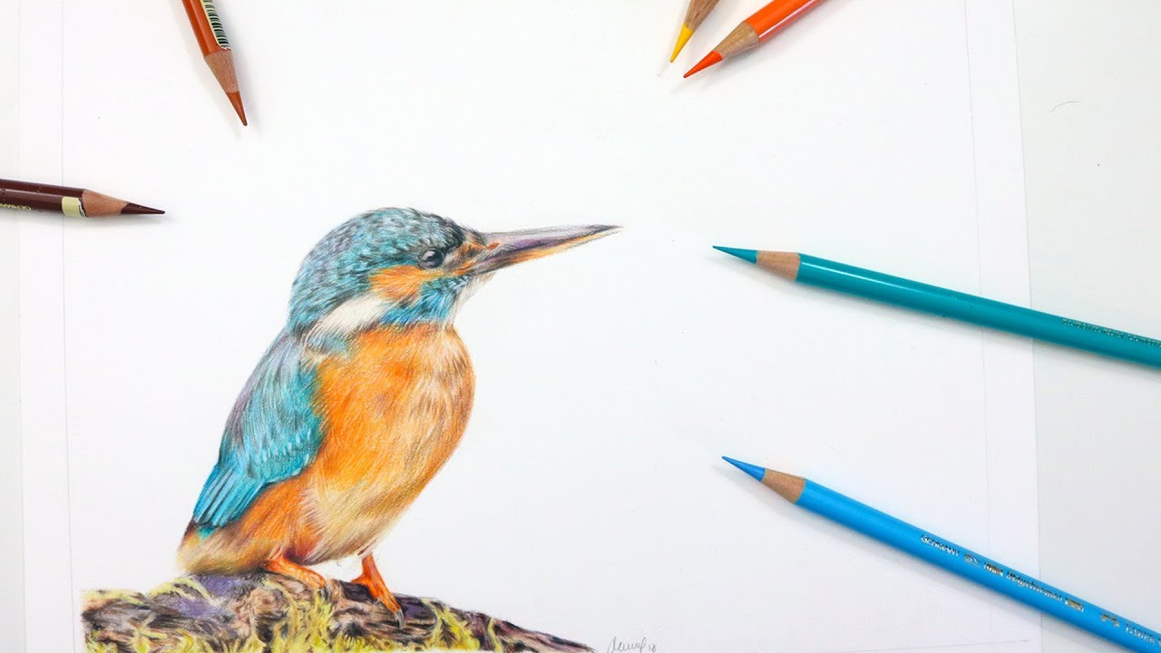 Kingfisher Drawing Step By Step
