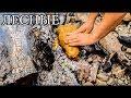 Дикая кухня - РЫБА В ГЛИНЕ   Steamed Fish In Clay