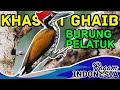 Khasiat Ghaib burung pelatuk bawang ! #ragamindonesia #burungbertuah