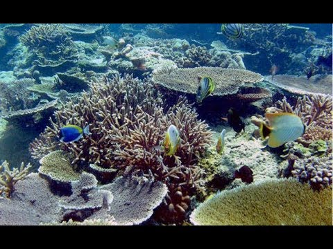 Northern Red Sea coral reefs may survive a grim future