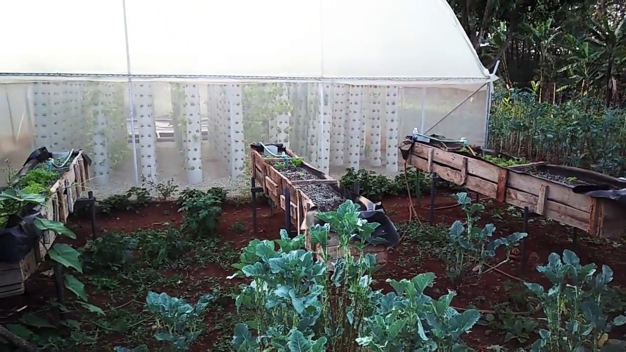 How to set up a simple aquaponics system made in kenya