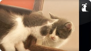 Cats Marvel at Mirror - Cats vs. Mirror