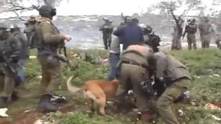 vuclip Kejam! israel Gunakan Anjing Serang Warga Palestina