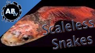 Scaleless Snakes : SnakeBytesTV : AnimalBytesTV