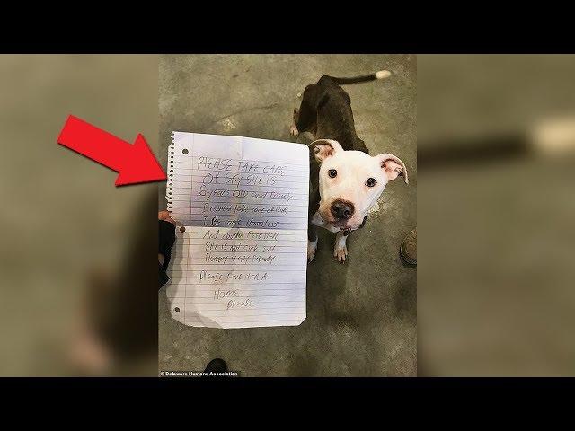 Encontraron a este perro abandonado y con una nota, mira lo que decía...