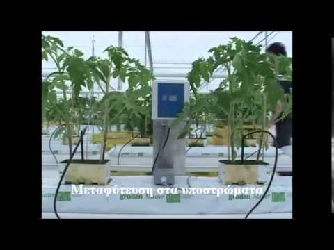 Υδροπονική καλλιέργεια τομάτας