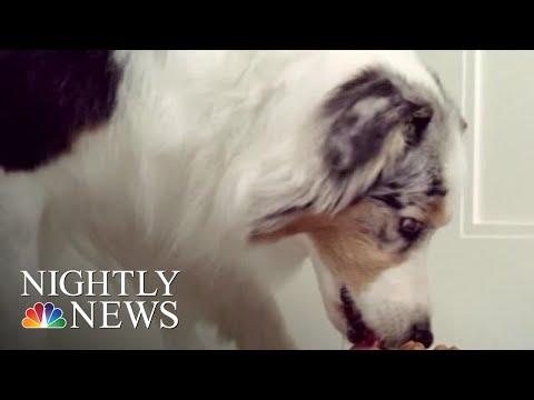 Lisa Berigan - LISA'S ANIMAL TALES: DOG FOOD RECALL