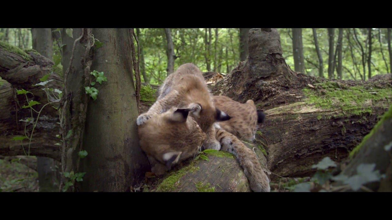 Příběh lesa – Trailer CZ dabing
