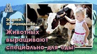 Животные выращиваются специально для еды (Оправдание 24)