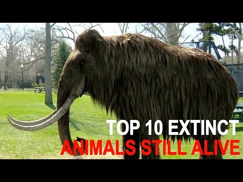 Top 10 Officially Extinct Animals That May Still Be Alive Today