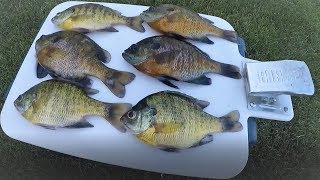 Bluegill catch and cook!!!