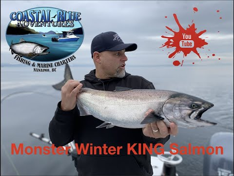 WOW Beauty Winter Springs - Chinook Salmon Fishing Comox BC With Coastal Blue Adventures.