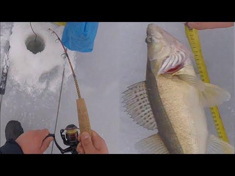 Kuhan Pilkintää Sepepilkillä / Zander Ice Fishing