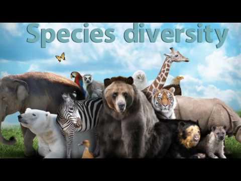 The Web of Life - Biodiversity