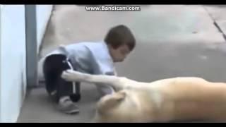 Самое трогательное видео в мире