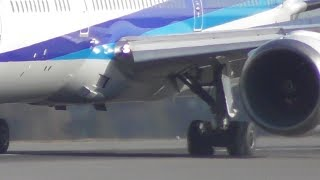 高松空港 全日本空輸ANA531便 バードストライク B787-9(JA830A) thumbnail