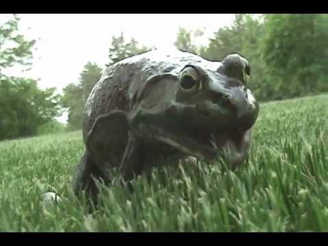 Funny frog better quality youtube - Funny frog pictures ...