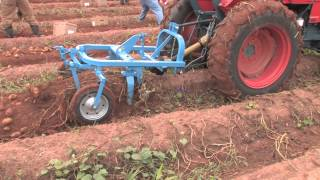 Repeat youtube video How To Harvest Potatoes
