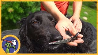 Как самостоятельно подстричь собаку