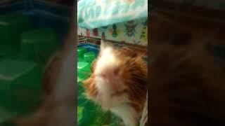 Genuine pig cam part 1