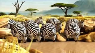 Мультфильмы онлайн бесплатно ЗЕБРА Смотреть мультфильмы бесплатно в качестве
