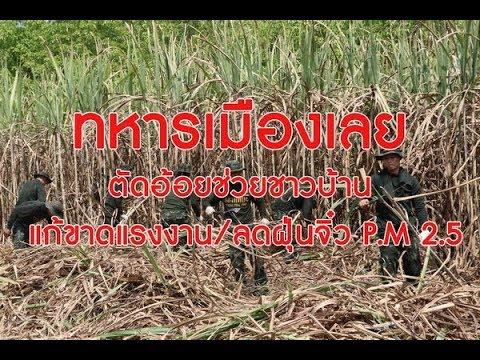 ทหารเมืองเลยตัดอ้อยช่วยชาวบ้าน แก้ขาดแรงงาน/ลดฝุ่นจิ๋ว PM 2.5