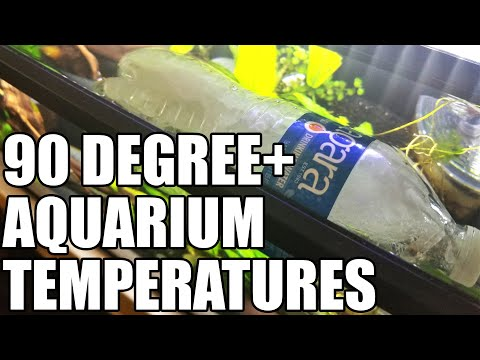 How To Cool Your Aquarium In A Heat Wave