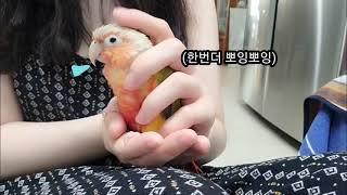 [엥집사] 앵무새로 만든 샴푸가 있다?!! 앵무새 샴푸…