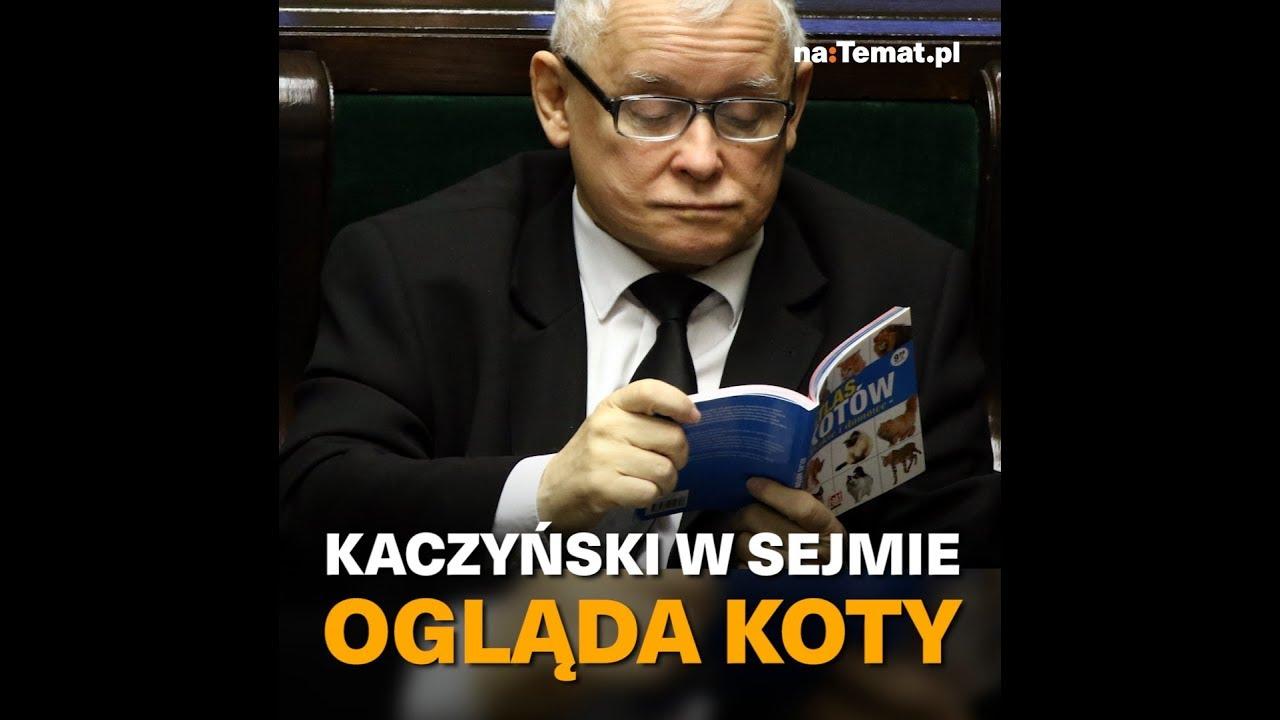 Kaczyński ogląda w Sejmie atlas kotów