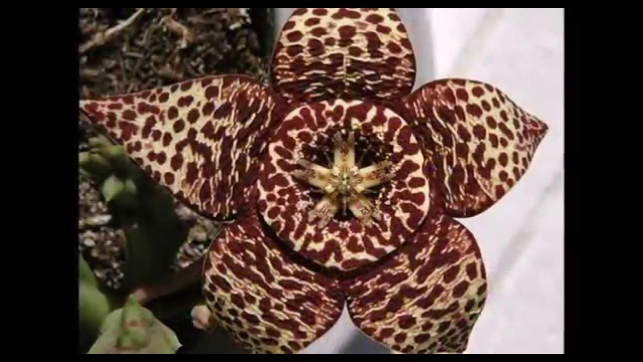 Mix dei fiori pi strani e belli del pianeta curiosita - I mobili piu belli del mondo ...