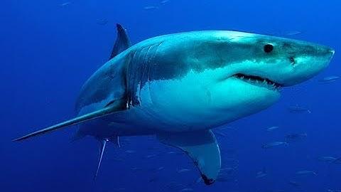 Die gefährlichsten Haie der Welt - Doku 2018 (NEU in HD)