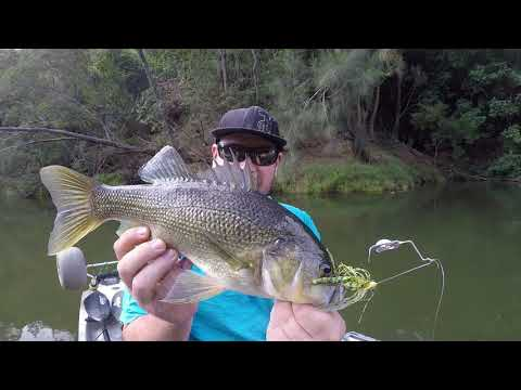 44cm Nepean River Australian Bass On Buzzbait,