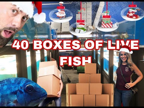 BIGGEST TROPICAL FISH SHIPMENT OF 2019 *UNBOXING*