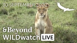 WILDwatch Live | 30 September 2020 | Afternoon Safari | Africa
