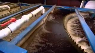 How to make Farmed Caviar {www downloadshiva com}
