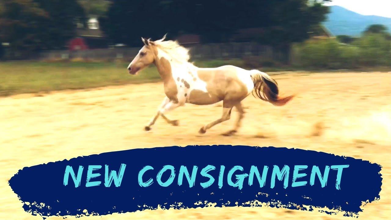 Sadie - New Consignment Horse!