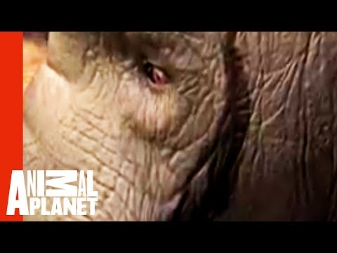 Untamed and Uncut - Elephant Rampage in India
