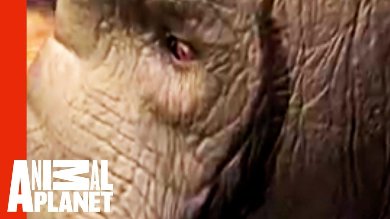 Elephant Fuk Women Video - Porn Pictures-8446