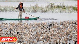 Gian nan nghề nuôi vịt chạy đồng mùa nước nổi | ANTV