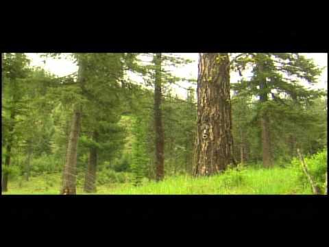 Hobbit House - Explorer from KXLY