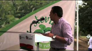 INAUGURAN PLANTACION DE STEVIA EN MATACAPAN MUNICIPIO DE SAN ANDRES TUXTLA