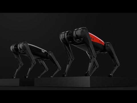 Introducing AlphaDog