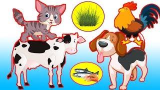 Сад для домашних животных / домашние животные на английском для детей видео