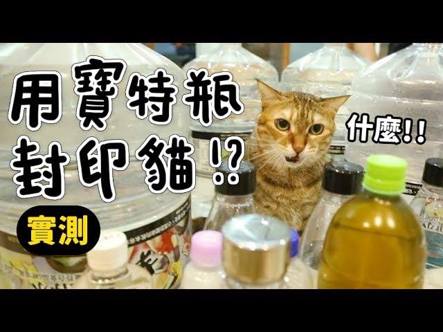 黃阿瑪的後宮生活-用寶特瓶封印貓-實測